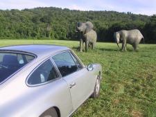 Elephant 911